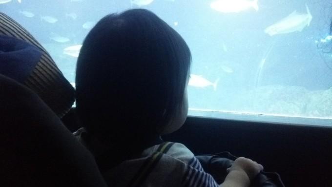 水族館の娘