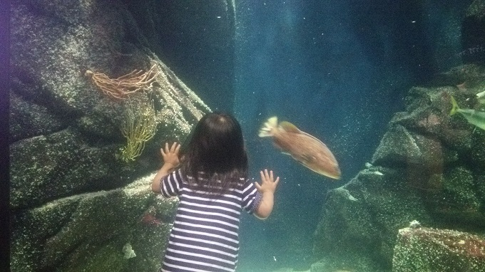 加茂水族館の水槽。娘もくぎ付け